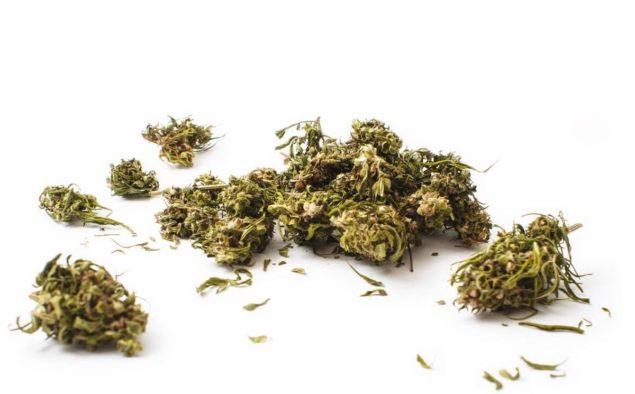 Come dare aroma e gusto alla vostra Cannabis Light, Marijuana Legale, EasyJoint