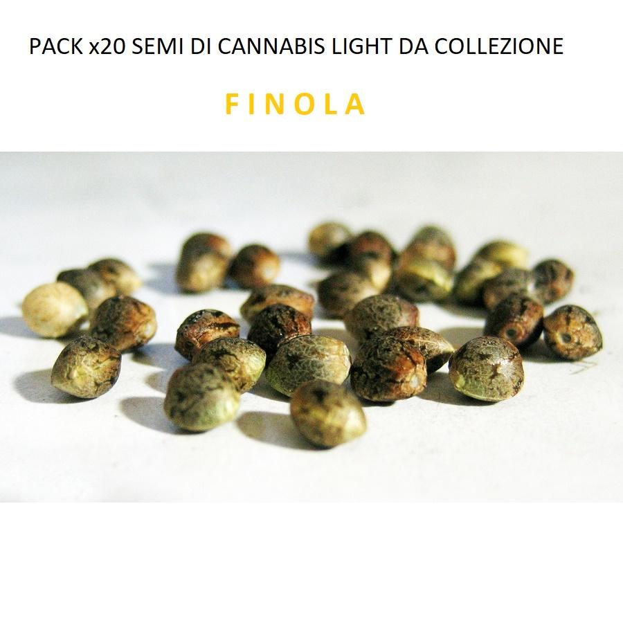 Semi di Cannabis Light