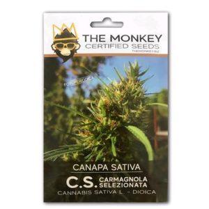 Semi di Cannabis Sativa Certificati ENSE