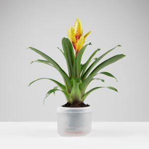 Vaso Till Planter