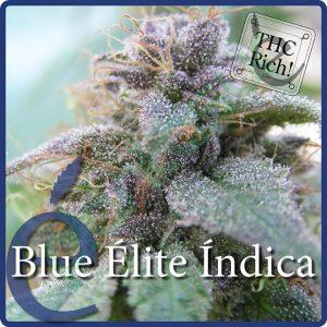 Blue Elite Indica