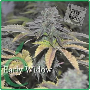 Early Widow