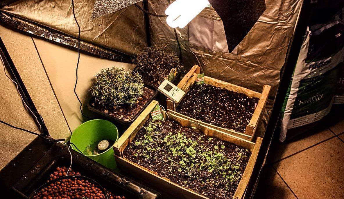 Le tre principali tecniche di coltivazione indoor