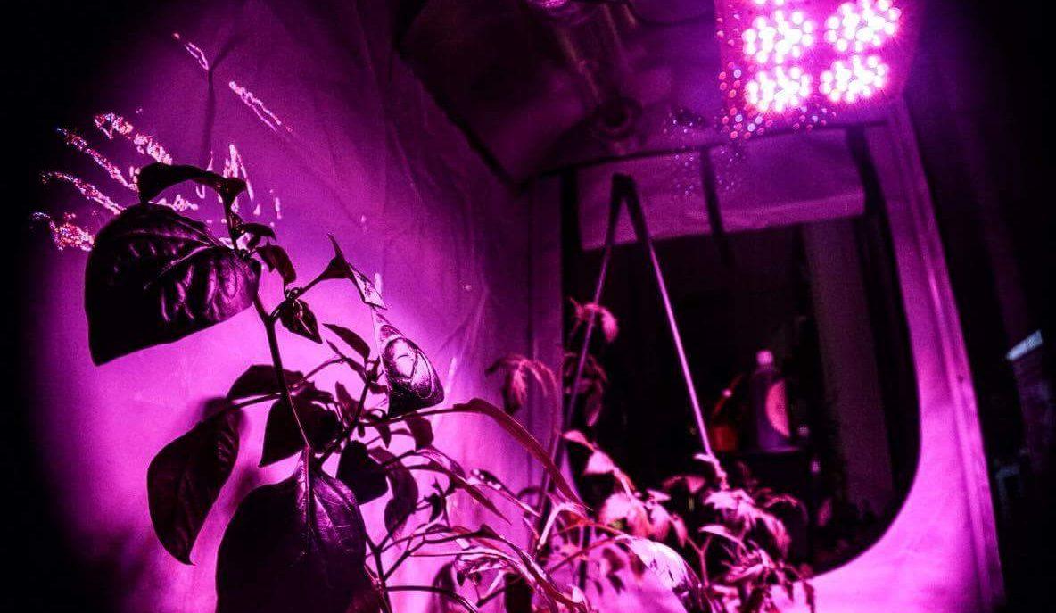 5 consigli per avviare la tua coltivazione indoor