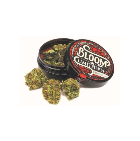 CanapaLife Bloom Limited #14 Cbd 10% Sinsemilla 3gr Infiorescenze di Cannabis Sativa L.