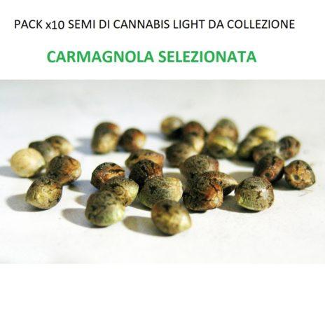 Pack x10 Semi di Cannabis Light da Collezione Varietà CARMAGNOLA SELEZIONATA