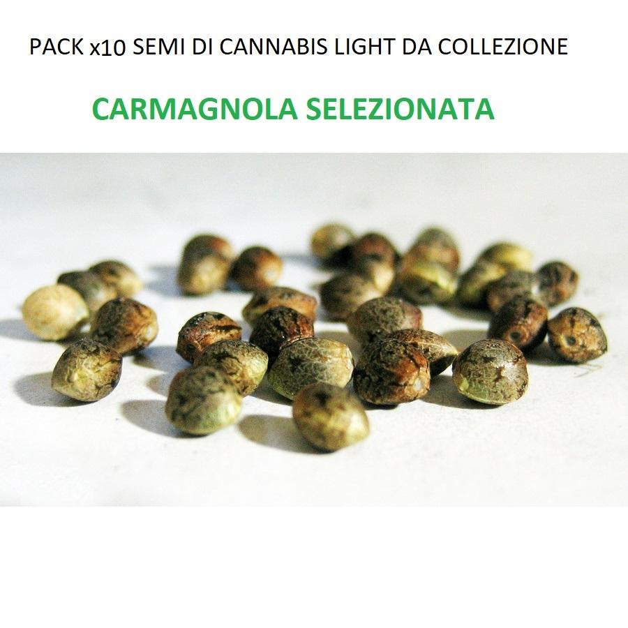 Semi-di-cannabis-light-da-collezione-CARMAGNOLA