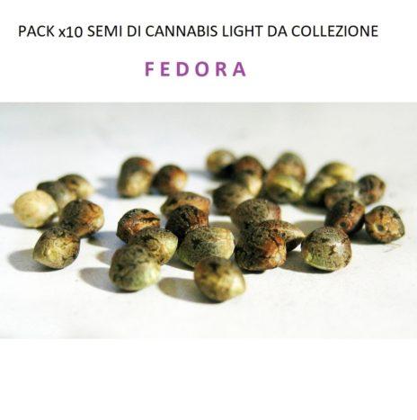 Pack x10 Semi di Cannabis Light da Collezione Varietà FEDORA 17