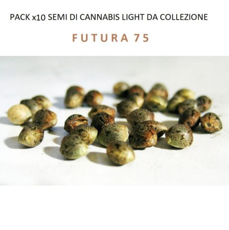 Pack x10 Semi di Cannabis Light da Collezione Varietà FUTURA 75
